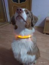 ISHOWTIENDA  Night Safety Pet Collar