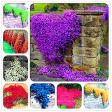100 Pcs Mixed Thyme Bonsai Plants 12 Colors Climbing Flower Potted Rare Ground Cover Creeping Rock Cress for Home Garden