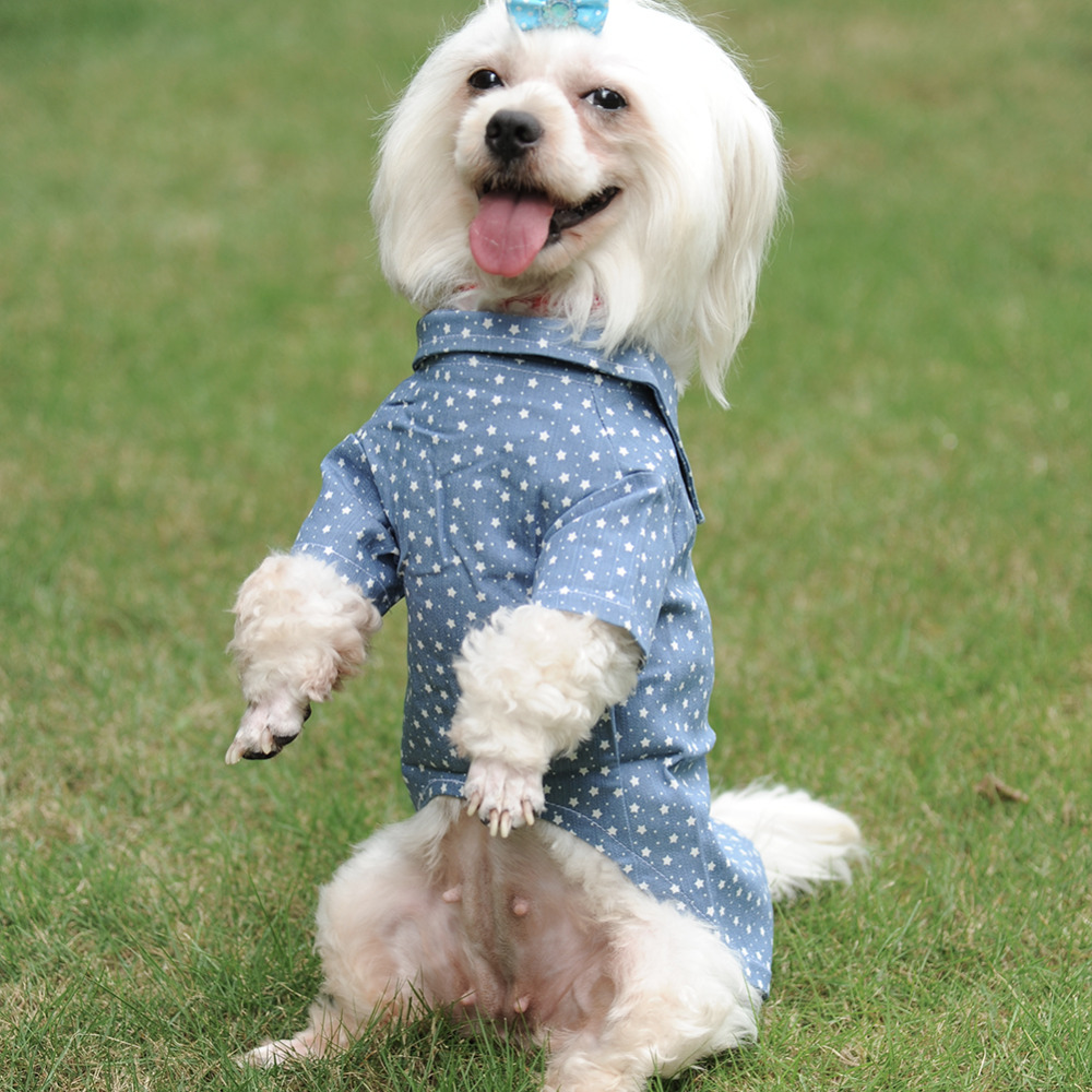 Beautiful Dog Suits For Weddings Photo - Womens Dresses & Gowns ...