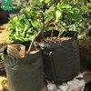 WHISM Potato Planting Bags Outdoor Cultivation Container Vertical Garden Pot Vegetable Planter PE Grow Bag Home Garden Supplies