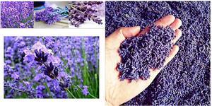 Image 4 - Natürliche Lavendel Getrocknete blume Getrocknete Getreide Groß Lavendel Füllung 1 Unzen Reale Natürliche anhaltende Lavend