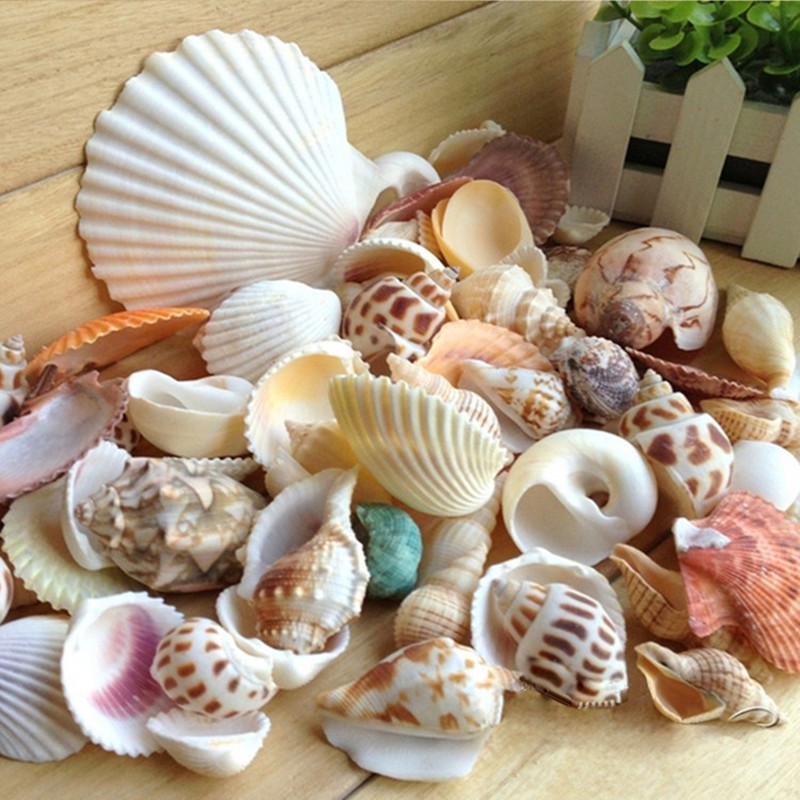 1 Pack Naturel Shell Décoration Conque Corail Starfish Méditerranée Fish Tank Aquarium Décor Micro paysage Photo Props