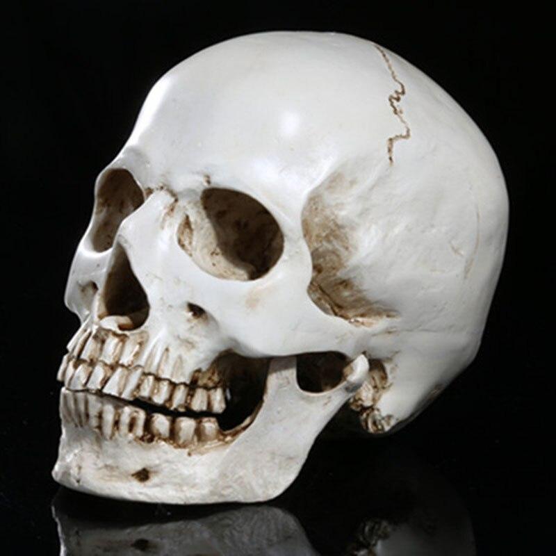 Mini Anatomical sculpture Human Skull Resin Replica