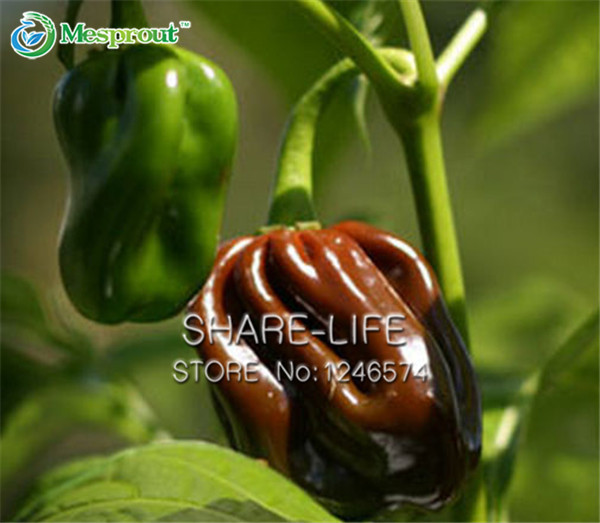 Online kopen Wholesale habanero planten uit China habanero ...