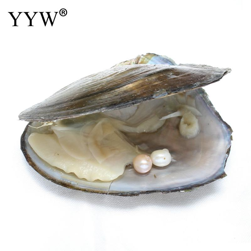 Have hole freshwater Pearls Vacuum-pack Oyster Wish Pearl Mussel Shell with Pearl Inside Mysterious Surprise Gift DIY 7-8mm