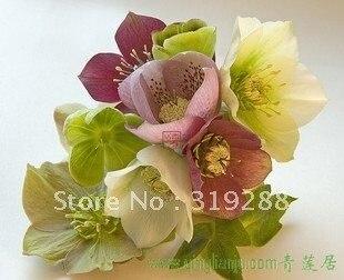10pcs/bag Helleborus Ice rose flower Seeds mixed colour DIY Home Garden