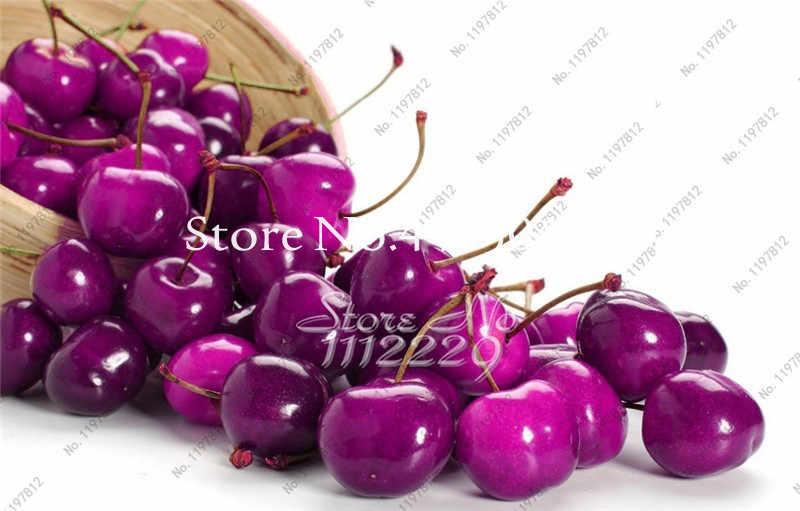 Dark Red Cherry Bonsai, rainbow Doce de Cereja Anão Fruit Tree Primavera Fazenda Casa Bonsai Plantas Fáceis de Crescer Melhor Embalagem 20 pcs