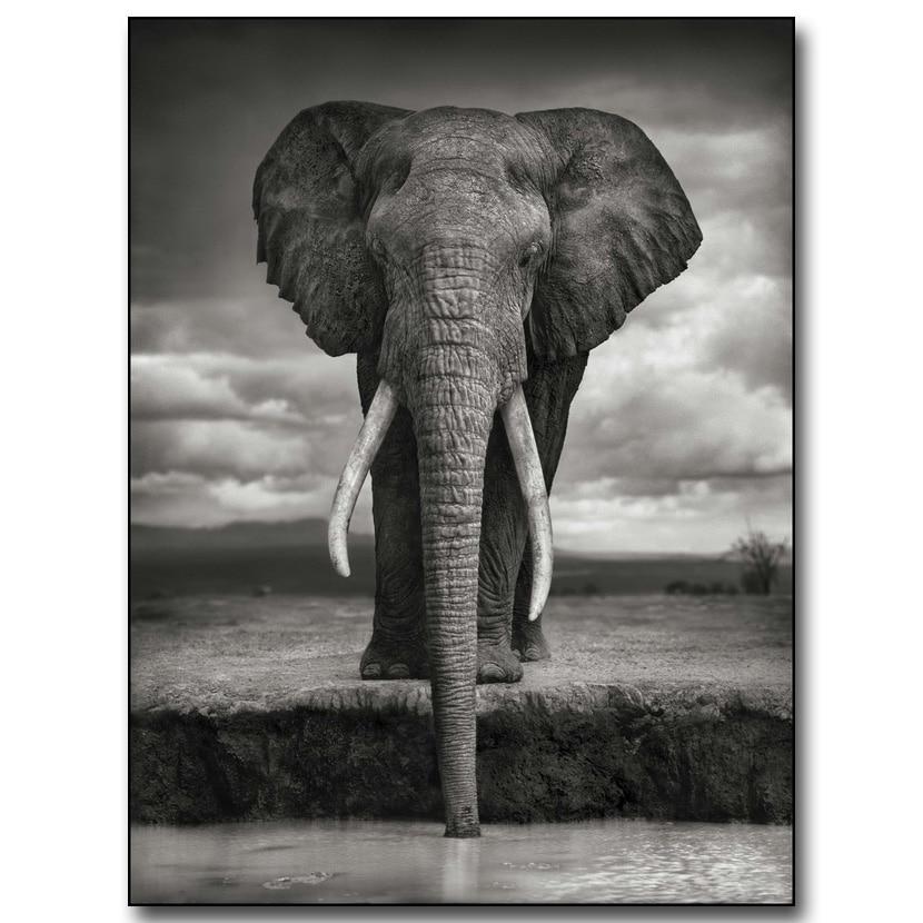 Africa Elephant Drinking