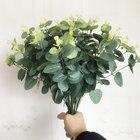 Small Eucalyptus tre...
