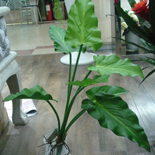 Artificial flower Calla lily leaveshigh quality PU gluing texture leaves DIY potted arrangements