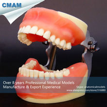 CMAM-DT2005 Comprehensive Practice Model of Dental Surgery