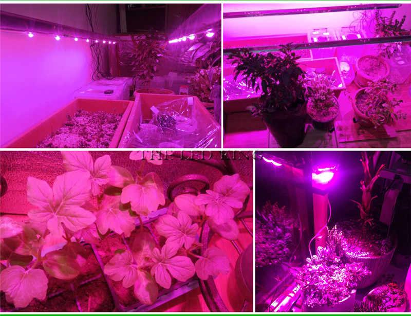 1X 4X 10X Led Grow Light Chip 20W 30W 50W 230V Full Spectrum 380nm~780nm Best for Hydroponics Greenhouse Grow DIY for LED Lamp