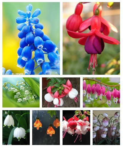 *100 Pcs / Bag Fuchsias Seeds, Potted Flowers, Diy Planting Flowers, Bell Flower, Lantern Begonia, Mixed Color