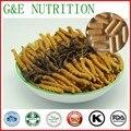 500 mg x 600 pcs Puro Cordyceps/worm grama/cordyceps sinensis/lagarta fungo Chinês Cápsula com frete grátis