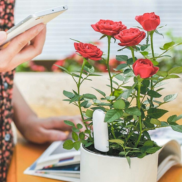 Version internationale originale Xiaomi Mi flore moniteur numérique plantes herbe fleur soin sol eau testeur capteur plante détecteur