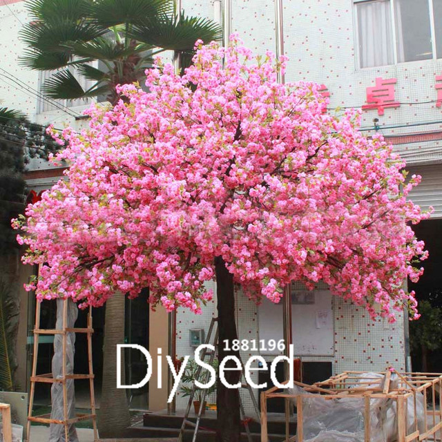 Kleinwüchsige Bäume Für Den Garten förderung! 10 teile/los roten japanischen kirschblüten samen hof