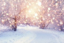 Laeacco Winter Snow Park Trees Light Bokeh New Year Photography Backgrounds Customized Photographic Backdrops For Photo Studio