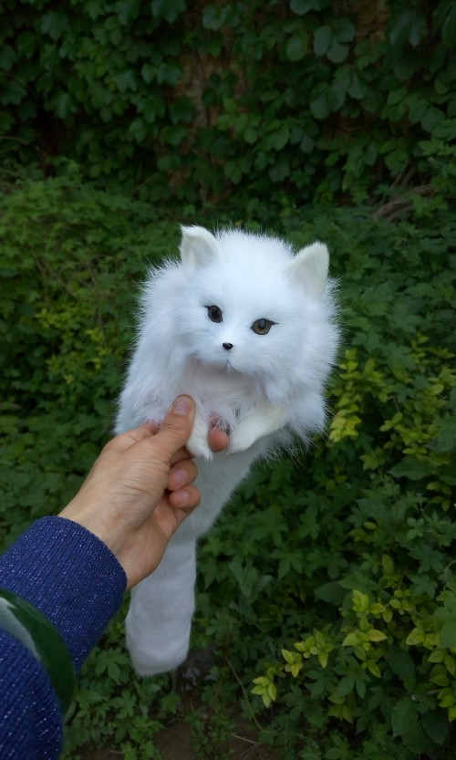 simulation cos fox large 65cm white fox model,lifelike soft fox toy decoration cosplay party gift t486 large 24x24 cm simulation white cat model lifelike big head squatting cat model home decoration gift t186