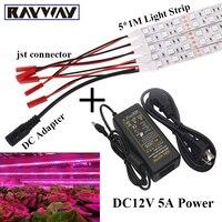 Venda quente 5*1 M SMD 5050 Tira LEVOU Cresce A Luz para As Plantas flor Lâmpada de Crescimento Vegetal + Conector DC + 12 V 5A Potência adaptador