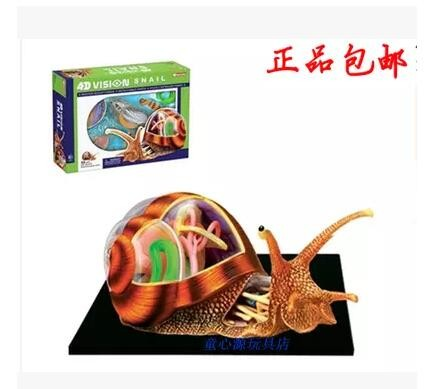 4D MASTER Puzzle assembly Snail Anatomy Assembled model 22*16*9.5cm free shipping mini human uterus assembly model assembled human anatomy model gift for children