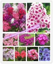100 pcs / bag,Phlox seeds, potted seed, flower seeds, Free Rose seeds Gift, (Mixed colors)(China)