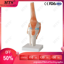 High quality Human anatomy skeleton Knee Joint with Ligament Anatomical Model traumatic pistol medical Teaching aid 45cm human anatomical skeleton model for medical anatomy teaching bone model