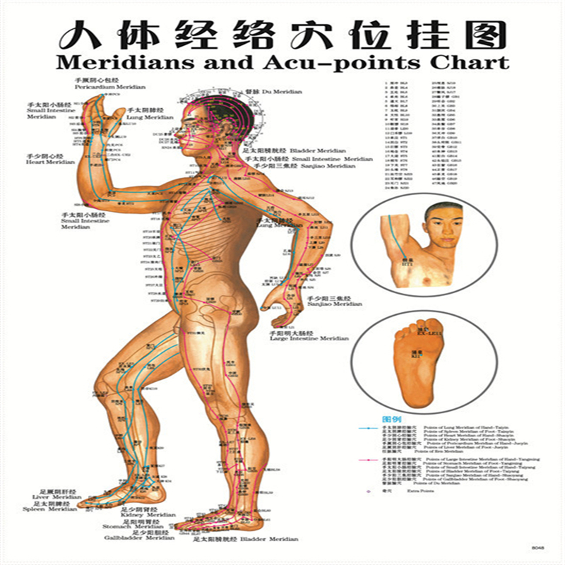 2017 Hot 7 pcs English Healthcare Human Acupuncture Wall Chart Diagram Foot Hand Head Ear Boby dual cd770 wiring harness dual cd770 display not working \u2022 45 63 74 91  at honlapkeszites.co