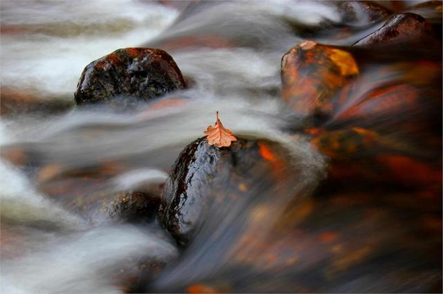 ãa leaf in the river streamãã®ç»åæ¤ç´¢çµæ