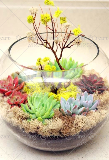 Potted Succulent Flower Seeds (1000 Pieces)