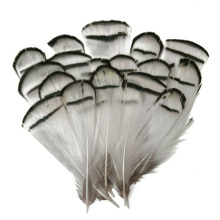 50pcs Natural Pheasant Feathers for Crafts 5-10cm/2-4inch Wedding Decoration White Jewelry Making Plumas