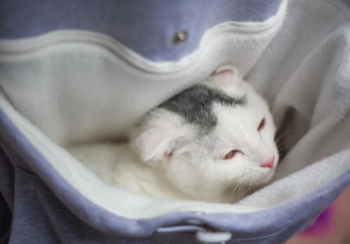 Cat lovers bluzy z cuddle etui dog pet bluzy dla kangura dorywczo swetry z uszy bluza 4xl drop shipping 27