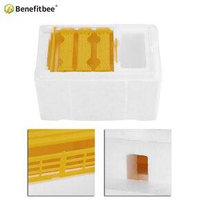 Image 4 - Bienenzucht BeeHive Box Ernte Beehive Königin Paarung Hive Benefitbee Marke Königin Paarung Beehive Bienenzucht Werkzeug Imkerei