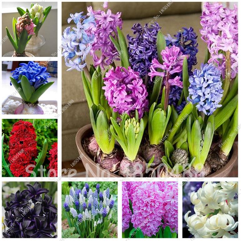 Günstige Frühling Blumen Werbeaktion-shop Für ... Balkon Im Fruhling Blumen