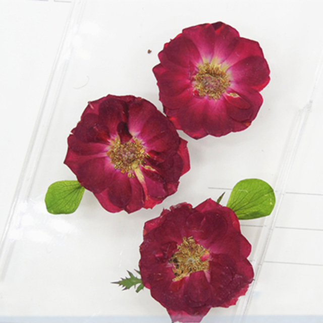 Small Original Wine Red Rose 2cm Diy Pressed Flower Stickers For