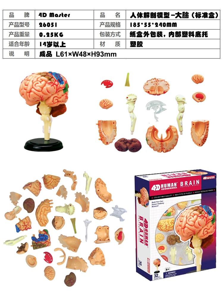 4D Science Assemble Blocks Human Body Zombie Skeleton Anatomy Skull Brain Torso Heart Anatomy Model Puzzle Medical Science Toys
