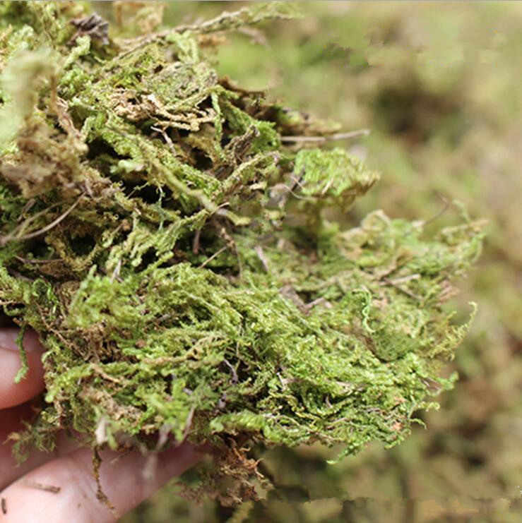 100g/bag real dried moss decorative plants turf for artificial Flowers decor flowerpot DIY decoration micro view grass wreath