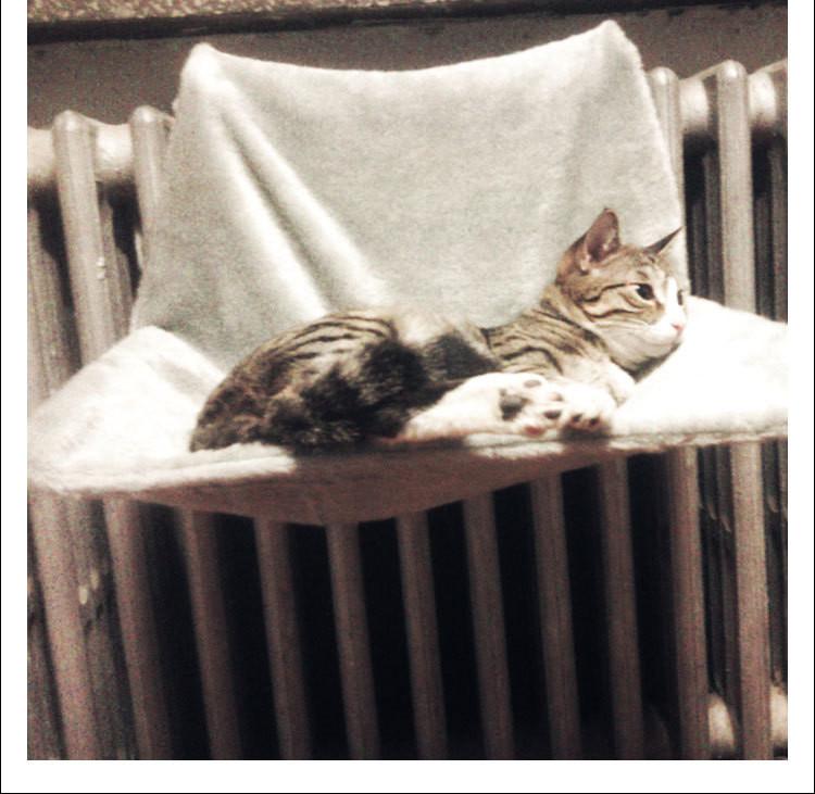 cat hammock radiator Cat Hammock Radiator Bed with Cozy Sheepskin Effect Cover HTB1ZhGnOVXXXXXyXpXXq6xXFXXXz