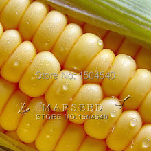 20 maize seeds corn seed good taste easy-growing Vegetables yellow fruit raw corn Bonsai plants Seeds for home&garden