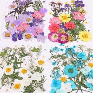 Натуральные сушеные цветы, комбинация, DIY прессованный гербарий, декоративные поделки, наполнитель для изготовления украшений вручную, мат...