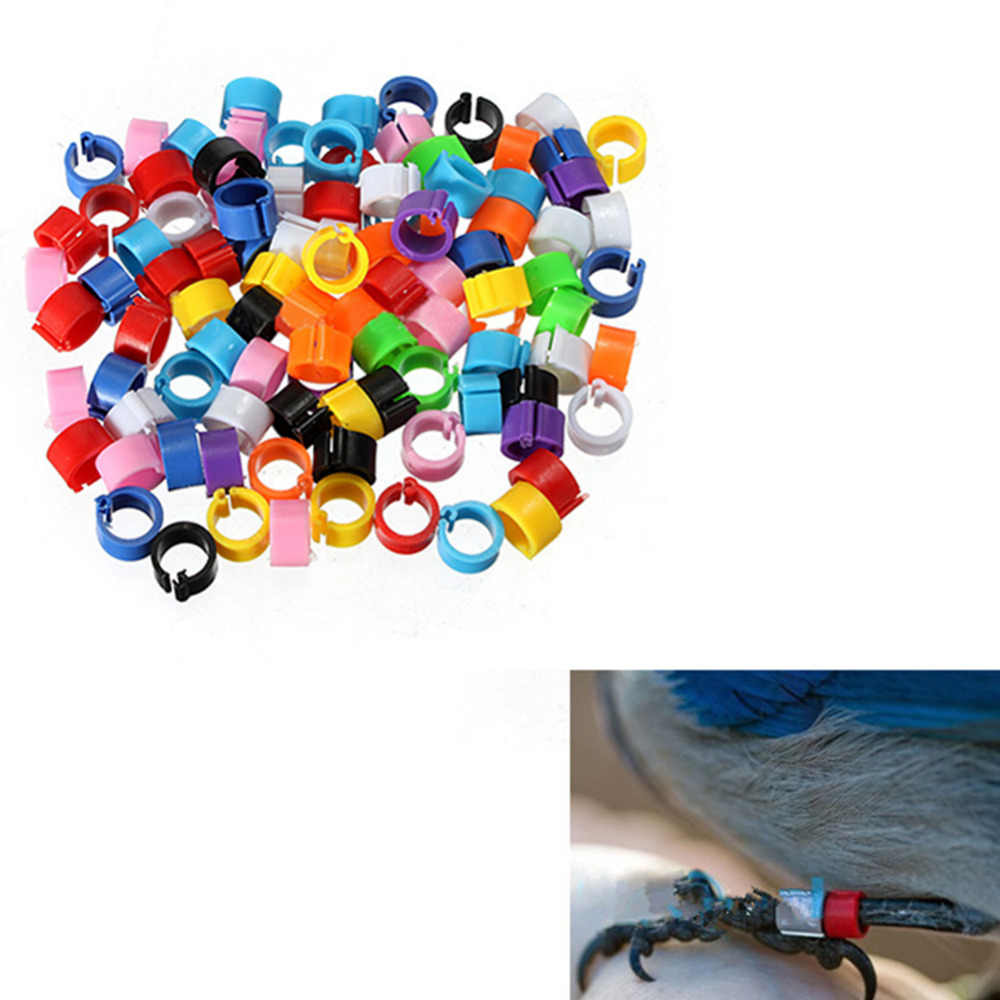 100 pz Uccello Anelli 8mm Leg Bands Pigeon Chicks Bantam Pollame a caso il colore Pet supplies
