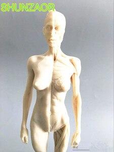 Image 2 - 30cm blanc humain femelle modèle anatomie crâne tête Muscle os artiste médical dessin squelette à vendre