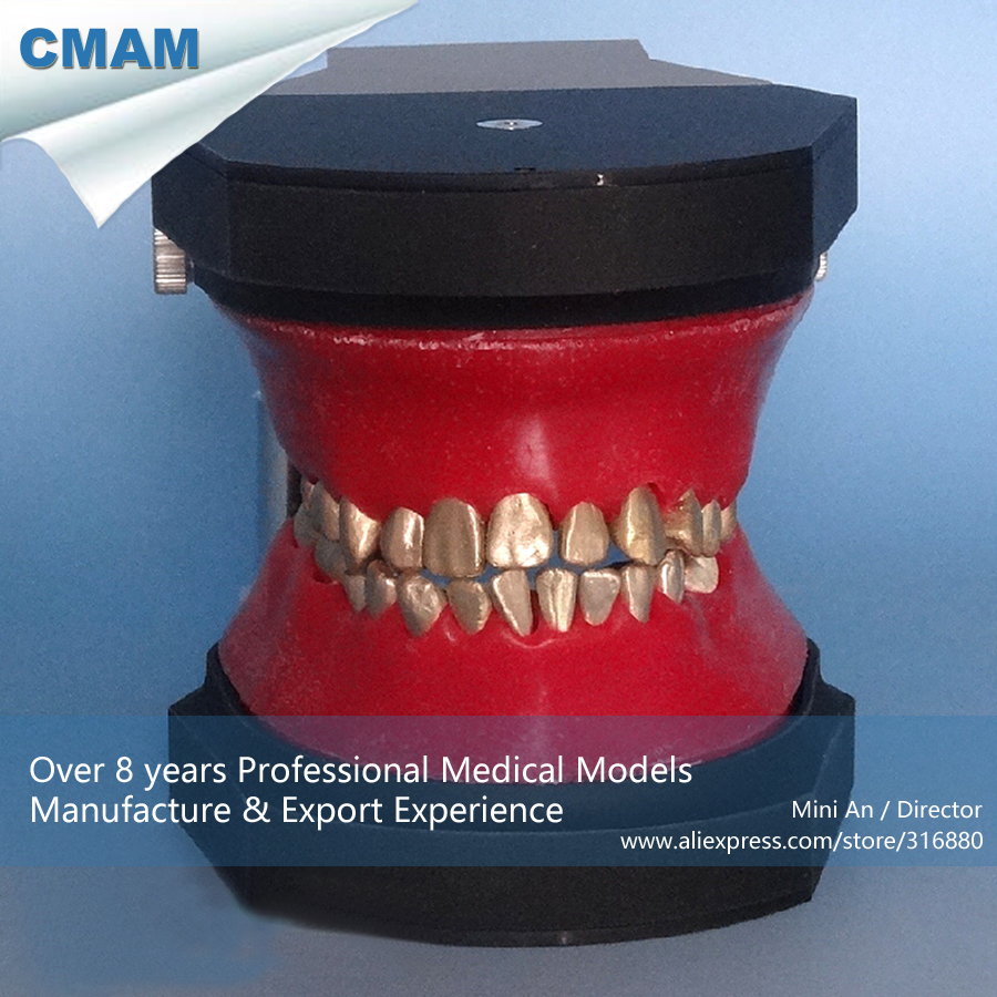 CMAM-DENTAL06 Oral Dental Typodont Model , Medical Science Educational Dental Teaching Models 2016 dental orthodontics typodont teeth model half metal half ceramic brace typodont with arch wire