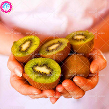 11.11 Big Promotion!200 pcs/lot giant Kiwi tree seeds juice fruit seed potted in garden&home aweet perennial organic herb plant