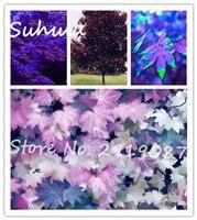 10 Частиц Редкие Фиолетовые Семена Клена в Мире Канада Красивый Фиолетовый Клен Бонсай Растения Дерево «фиолетовый Призрак» легко Расти