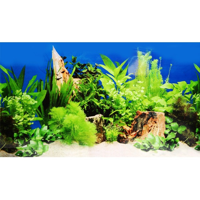 Are nitrates harmful for my aquarium?   Algone