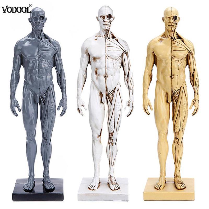 VODOOL 30 cm Human Body Muscle Resin Statue Sculpture Manikin Medical Teaching Model Decor Student School Craft School Supplies цена