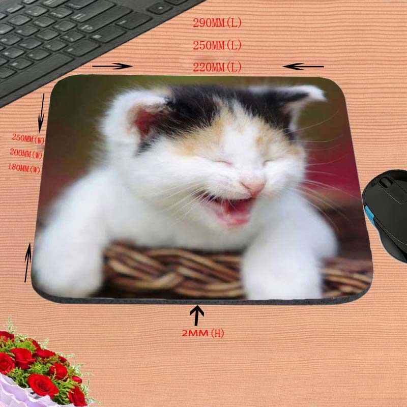 Gatos lindos Backgroun blanco de la nueva llegada de la alta calidad - Periféricos de la computadora - foto 6
