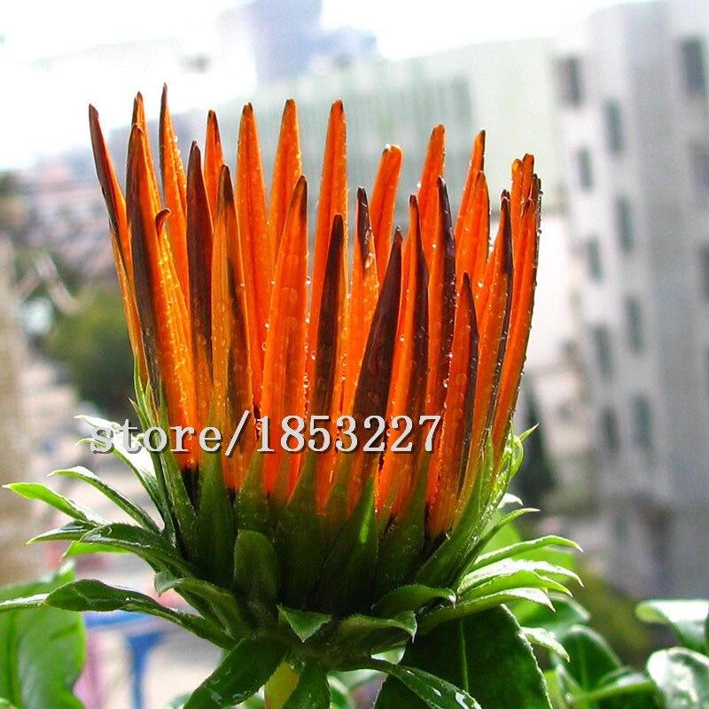 venta caliente rare 20 tipos medalla de especies crisantemo en