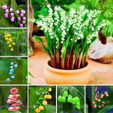100pcs Convallaria majalis Bonsai beautiful rainbow Lily of the valley flower perennial indoor garden flowering potted plants