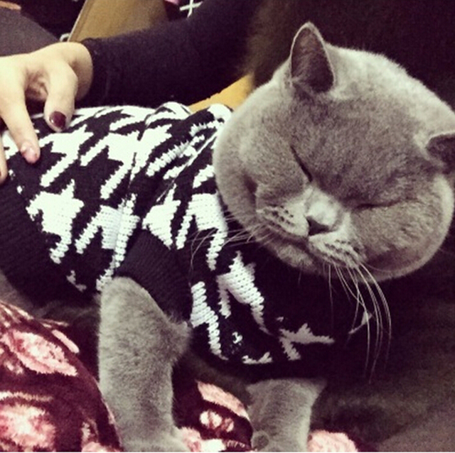 Classic Houndstooth Sweater For Small Cat Sweater Pet Jumper Coat Puppy Cat  Clothes Ragdoll Canadian Hairless